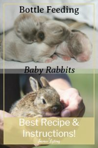How to Feed Orphaned Baby Rabbits - Jaimie Listens: Feeding baby bunnies can be a really big challenge. You need the right formula and technique to give them the best chance of survival, and I will give you step by step instructions on what I did to save my baby rabbits!