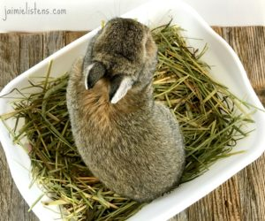 The Easiest Way to Litter Box Train Your Bunny Rabbit - Jaimie Listens: Rabbits are some of the easiest creatures to litter box train. I will give you step by step instructions on how I litter box train my rabbits and the best materials to use for rabbit litter.