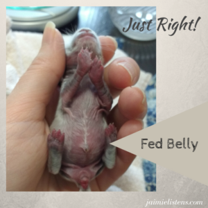 Baby Rabbits: 5 Signs They Need You to Intervene - Jaimie Listens: It is easy to think baby rabbits have been abandoned by their mothers, when they are just fine. You need to know what to look for before you take charge of trying to care for them or they may get sick or die for no reason.