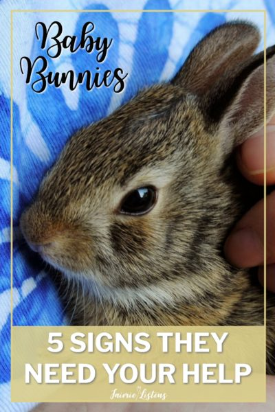 Baby Rabbits: 5 Signs They Need You to Intervene - Jaimie Listens: You found a nest of wild baby rabbits and it seems they have been abandoned by their mother. It's good to know what to look for before taking charge of their care.