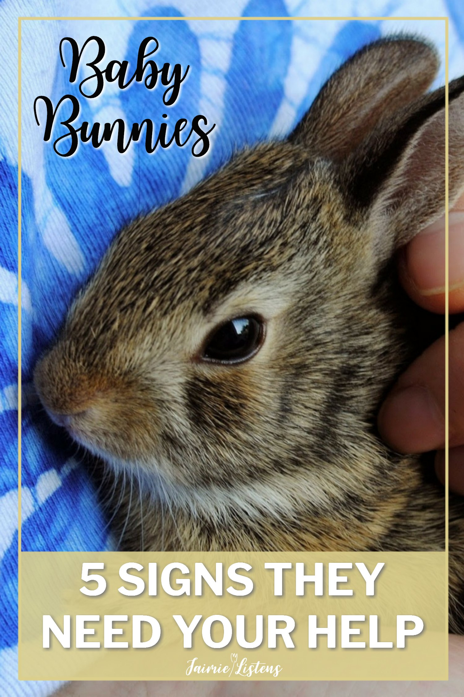 Baby Rabbits: 5 Signs They Need You to Intervene - Jaimie