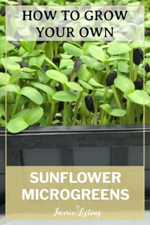 DIY Sunflower Microgreens in 7 Easy Steps - Jaimie Listens: Growing sunflower microgreens is easy, inexpensive and fun! I show you the best practices for the most delicious harvest!
