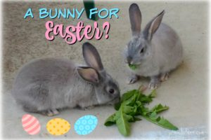 13 Things You Must Know Before Getting a Bunny for Easter! - Jaimie Listens: Helpful facts about pet rabbits that will help you decide if a bunny is right for you.